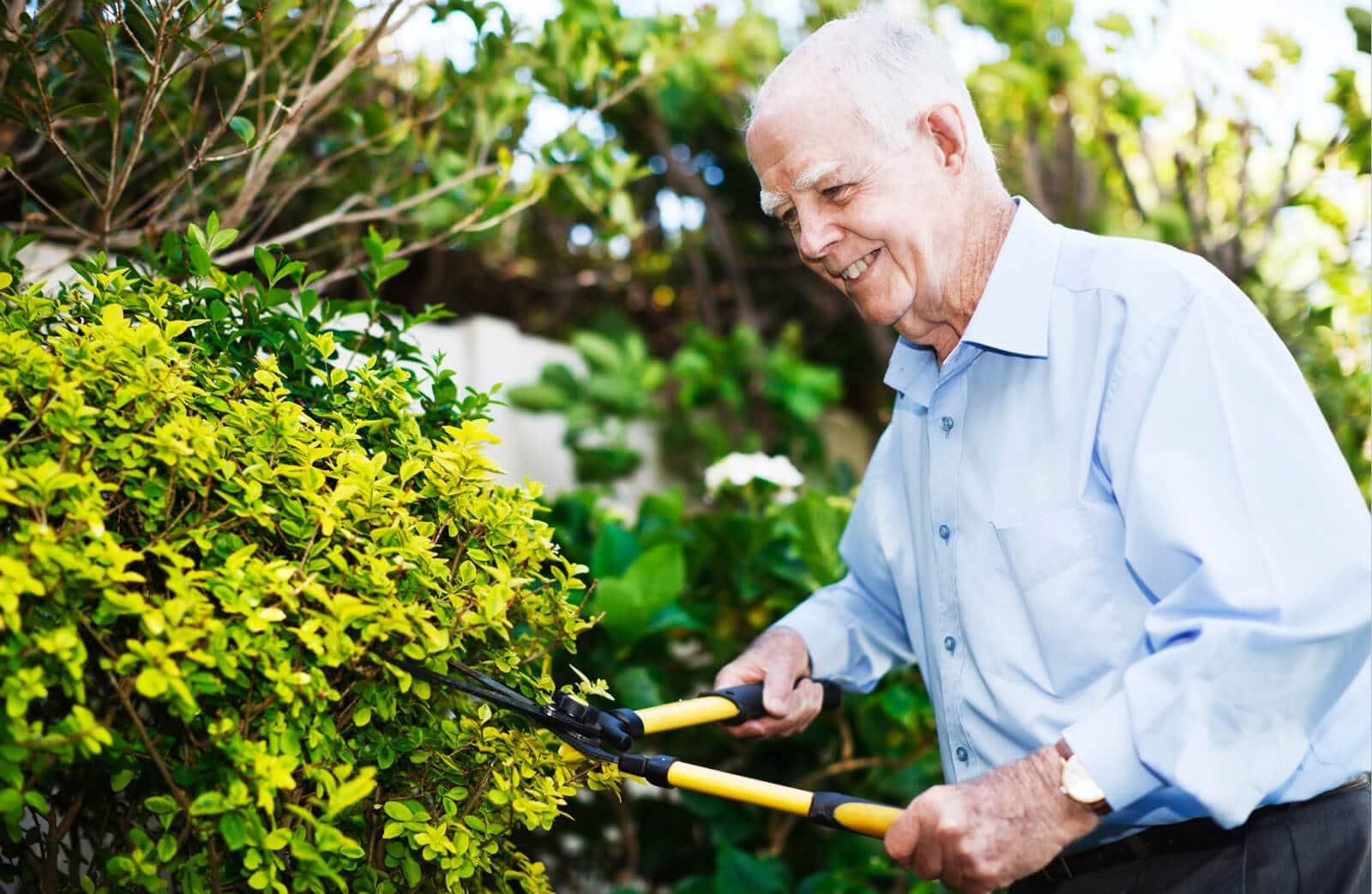 trimming bush