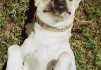 5 Dog Breeds For Seniors